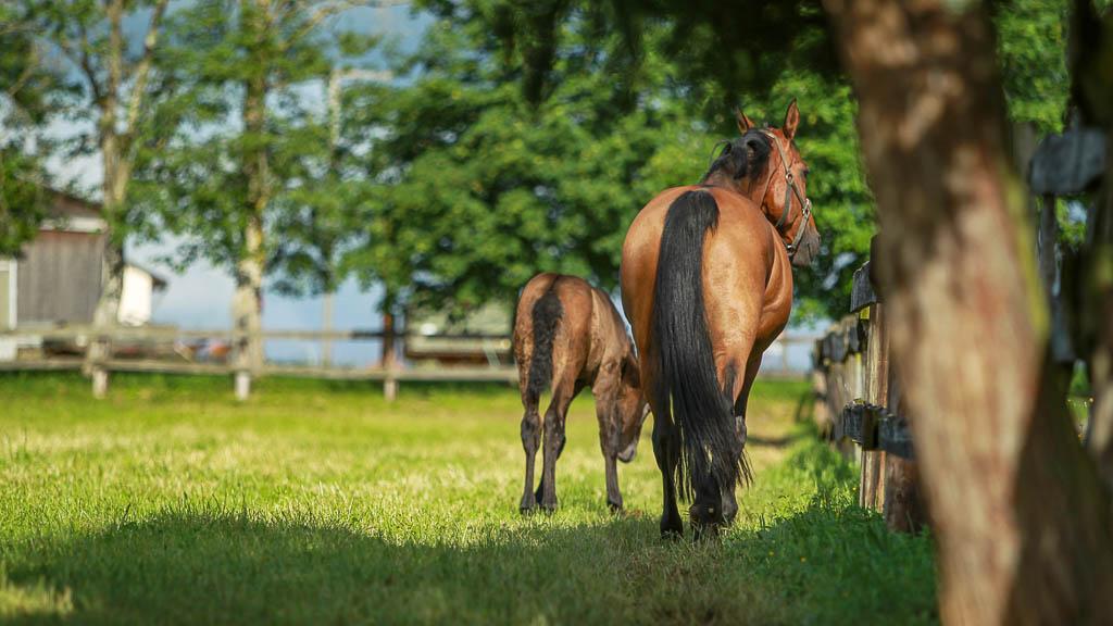Reitanlage Pferdehaltung Waldhof Wildberg Anlage Fohlenweide 65 fb