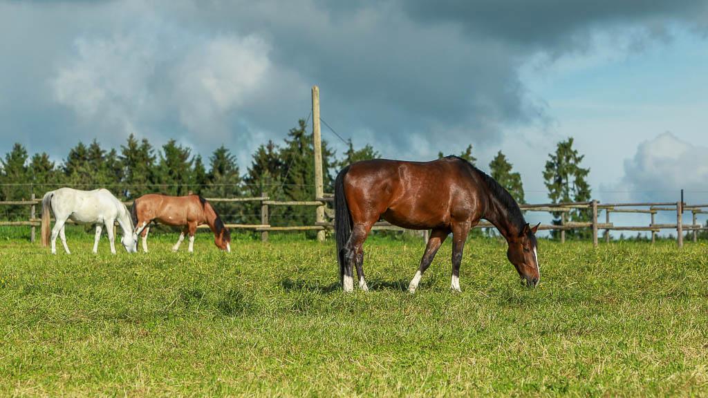 Reitanlage Pferdehaltung Waldhof Wildberg Anlage Pferde auf Koppel 13 fb