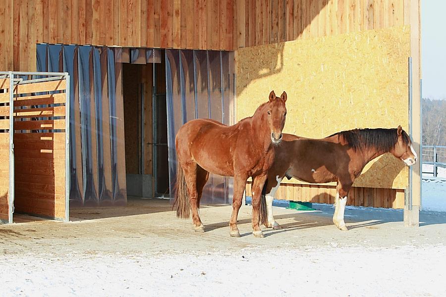 Waldhof Wildberg Aktivstall Offenstall Pferde am EIngang