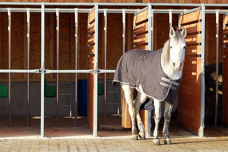 Waldhof Wildberg Aktivstall Offenstall Pferd bei den Futterboxen