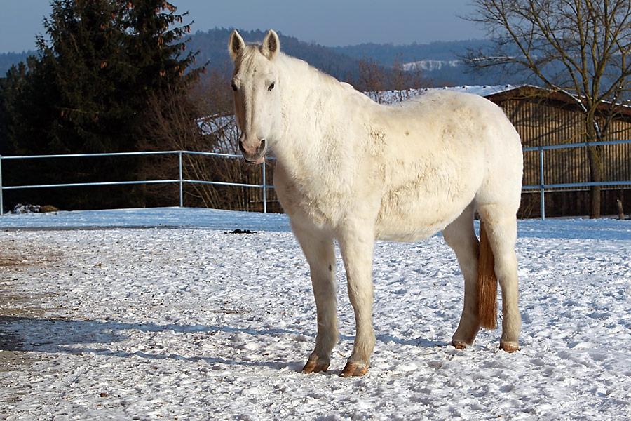 Waldhof Wildberg Aktivstall Offenstall Pferd im Paddock
