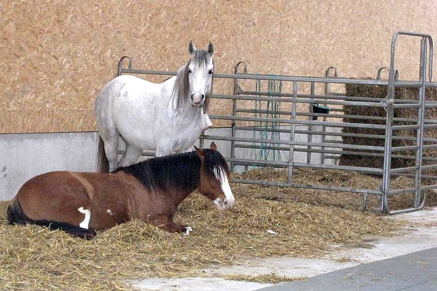 Waldhof Wildberg Aktivstall Offenstall Pferde in Eingewöhnungsbox