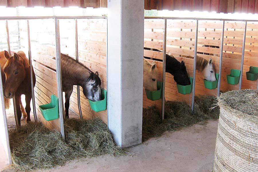 Waldhof Wildberg Aktivstall Offenstall Pferde bei Fütterung