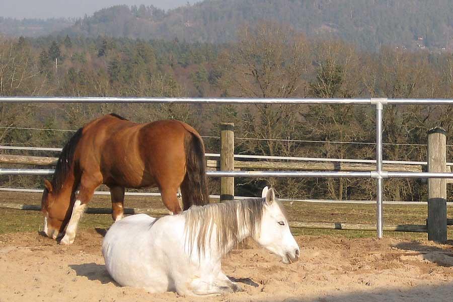 Waldhof Wildberg Aktivstall Offenstall Pferde im Sandbad